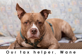 Tax Helper: Wane photo